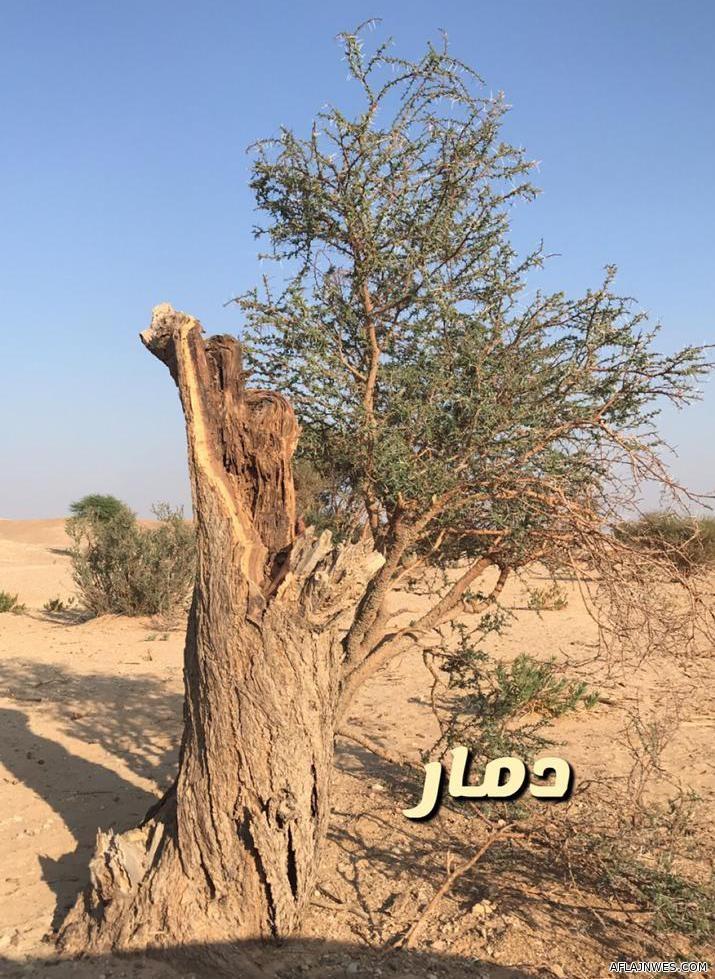 بالفيديو : جريمة جديدة يرتكبها محاربو البيئة بحق الأشجار في الأفلاج