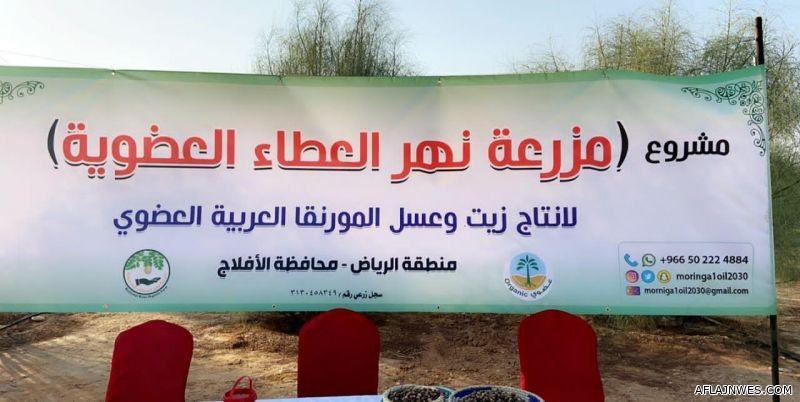 الأفلاج تحتضن أكبر مزرعة عضوية للمورنقا العربية في العالم